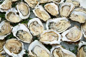 MSX and Its Affects on Oysters