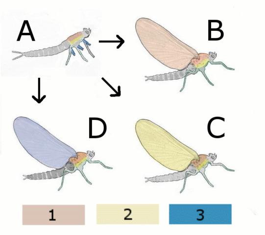 Jordas første insekter