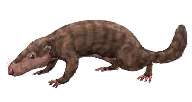Jordas første pattedyr