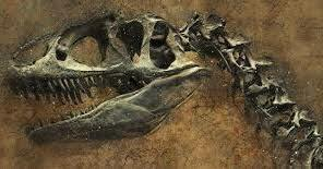 Primera prova fòssil que va trobar sobre la mutabilitat de les espècies