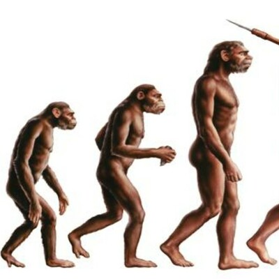 Primats a homínids timeline