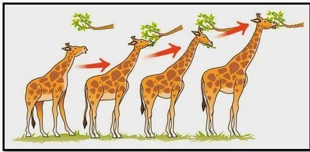 Exemples de la teoria de la selecció natural.
