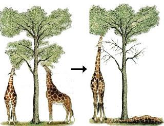Teoria Selecció Natural