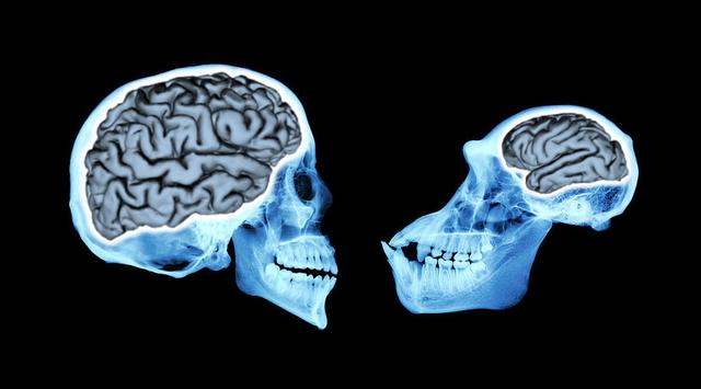 La mandíbulan i el crani