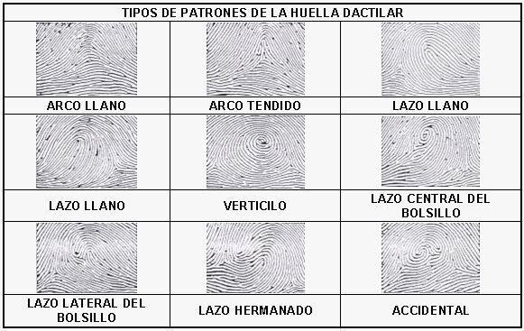 Tipos de huellas dactilares.