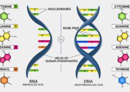 Intercambio y comparación de ADN.