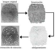 Huellas dactilares y su clasificación