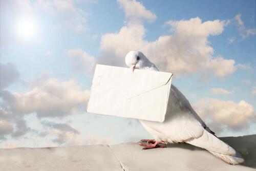 Primer sistema de mensajería de palomas