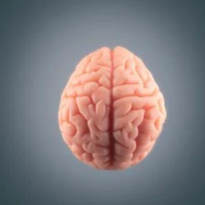 Psicobiología: Origen, definición y aportes de grandes autores. timeline