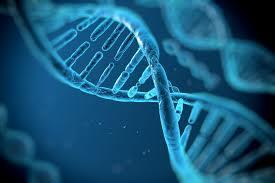 Modelo ADN