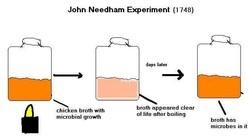 John Needham, organismes unicel·lulars