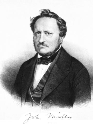 Johannes Peter Müller.