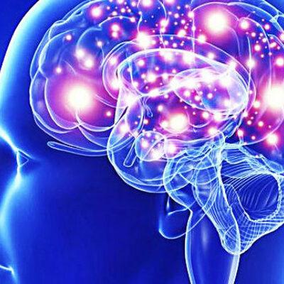 Historia de las neurociencias  timeline