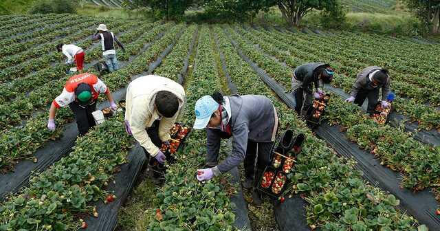 Agricultura 1910-1920