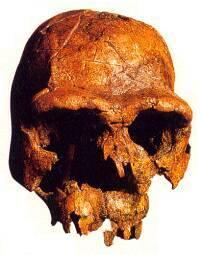 L'Homo habilis, el primer Homo