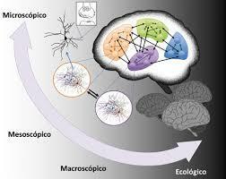Mitad del siglo XX- Avance en el conocimiento del sistema nervioso