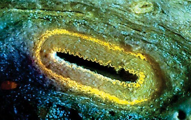 Aplicaciones del Microscopio de luz ultravioleta