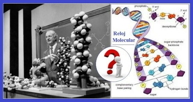 Sistemática y genética molecular