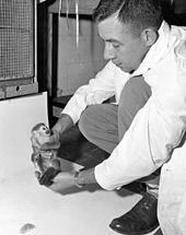 First US Animal in Space