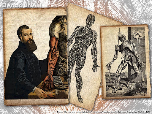 Andreas Vesalius (1511 - 1564)