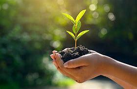 Iniciativas del desarrollo sustentable