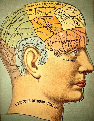 La frenología cómo precursora de la neuropsicología