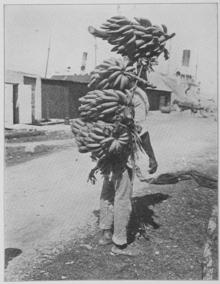 massacre of banana plantations