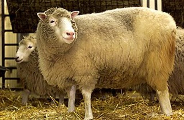 Cloning of Dolly the Sheep