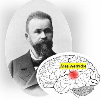 Teoría localizacionista relación con la neuropsicología