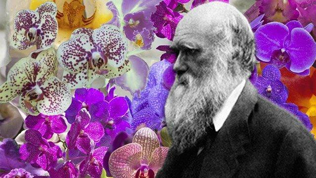 LAS FLORES DE DARWIN