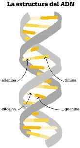 DECODIFICANDO EL ADN