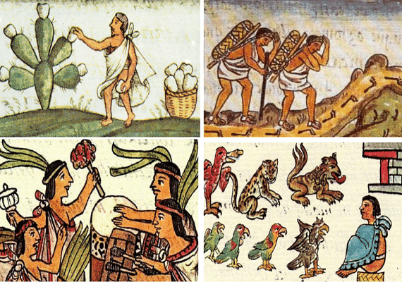 Economía Mixteca