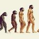 De primats a homínids