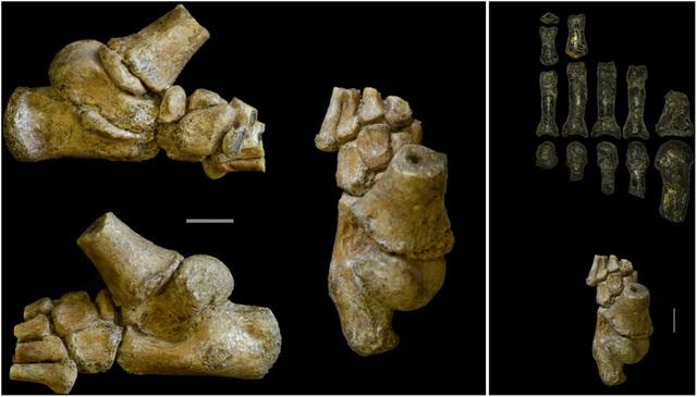 Austrolpithecus