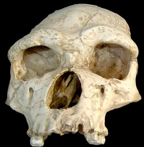 Homo neanderthalensis (Capacitat cerebral)