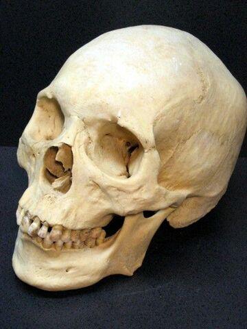 Homo sapiens (capacitat cerebral)