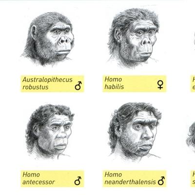 Un arbre filogenètic de l'evolució dels homínids timeline
