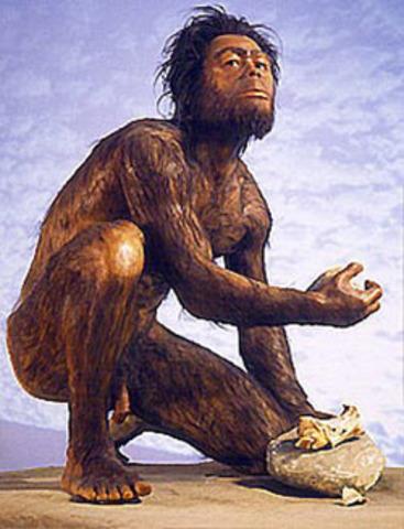Homo habilis - 2 million to 1.5 million B.C.E.