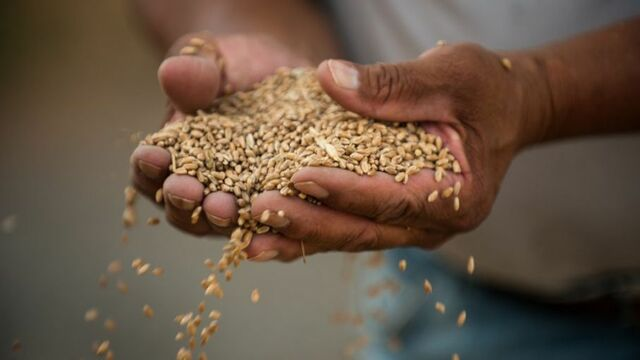 Abastecimiento de trigo