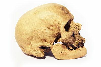 Homo sapiens 2