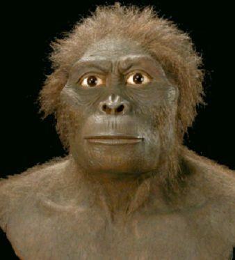 Australopithecus bahrelghazali