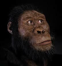 Australopithecus amanensis