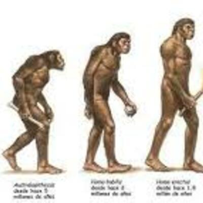 De primats a l'hominids timeline