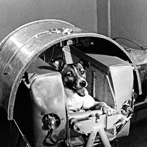 First Animal in Space by the USSR
