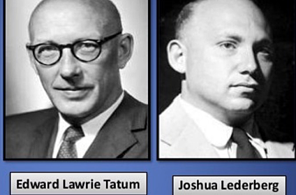 Joshua Lederbergy Edward Tatum demuestran que las bacterias también intercambian material genético en función de su sexo