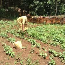Feminismo en Kenia