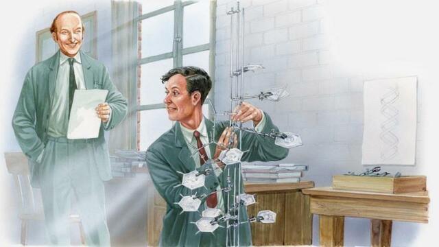 Watson y Crick logran elaborar el conocido modelo de la doble hélice.