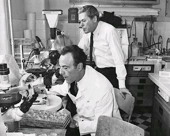Jacob y Monod dedujeron el modo de funcionamiento del operón de la lactosa de E. coli
