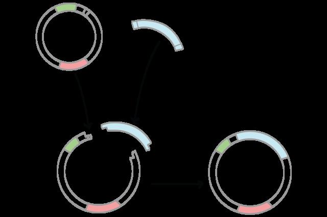 El primer gen de humanos se clona
