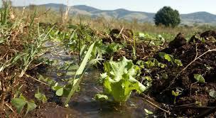 Ley de Conservación de Suelos y Agua